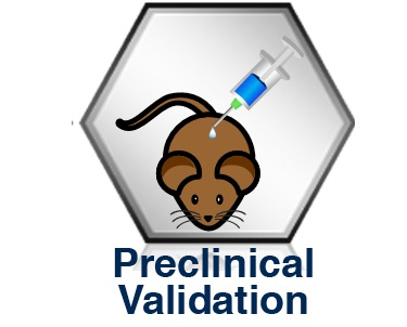Preclinical validation